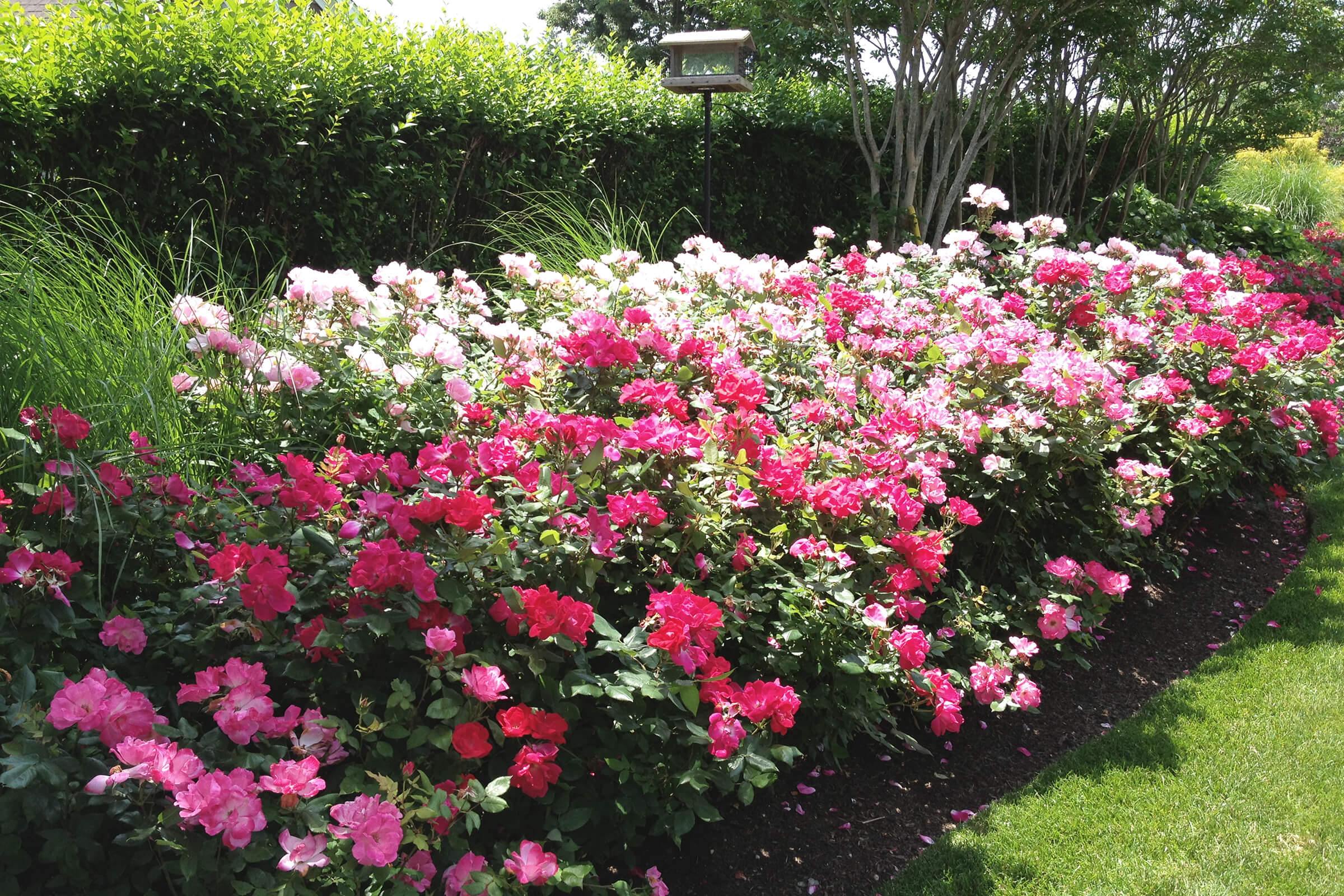 Flowers planted by our landscapers