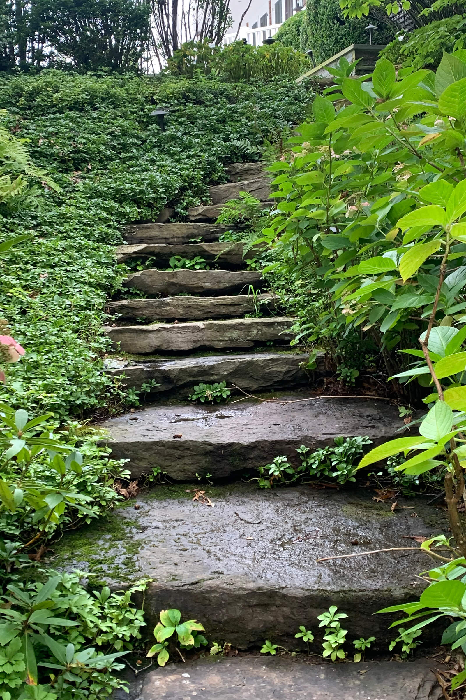 Stone stairs with shrubbery created by our landscapers