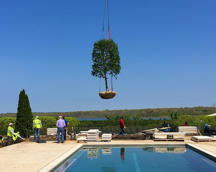 A tree being lowered in by crane