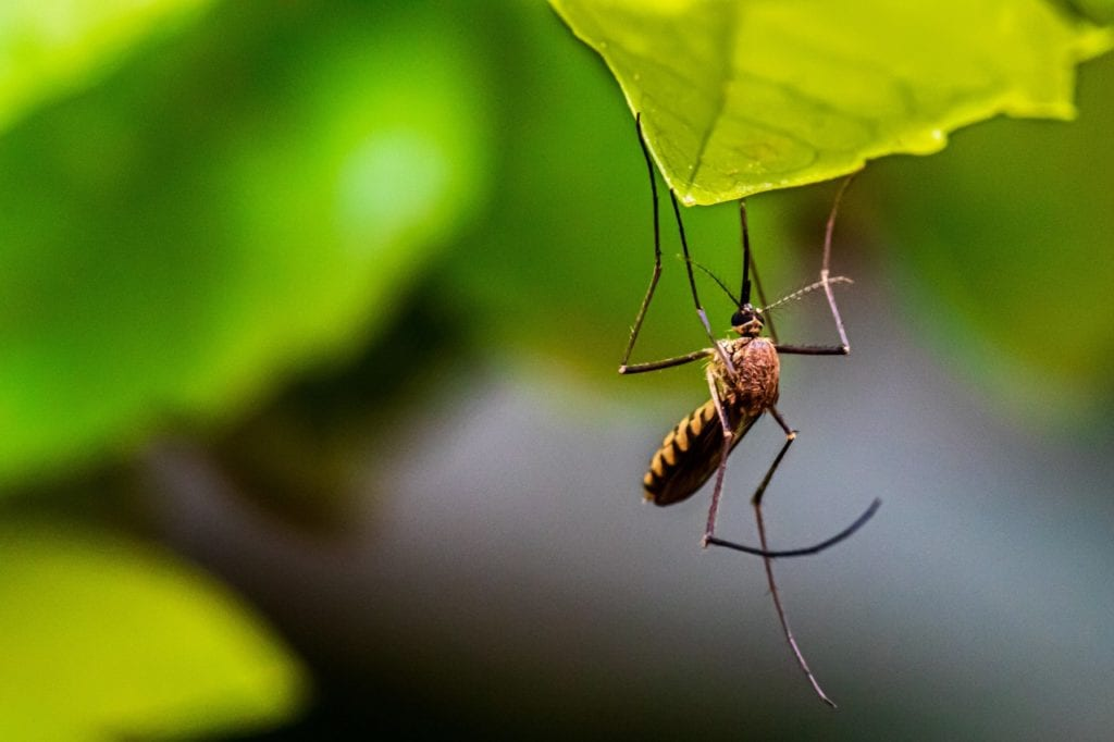 mosquito-control-for-yard
