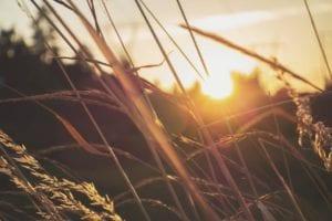 native-grasses