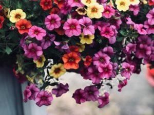 what-to-plant-in-summer-months