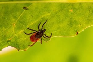 tick-control-for-lawns