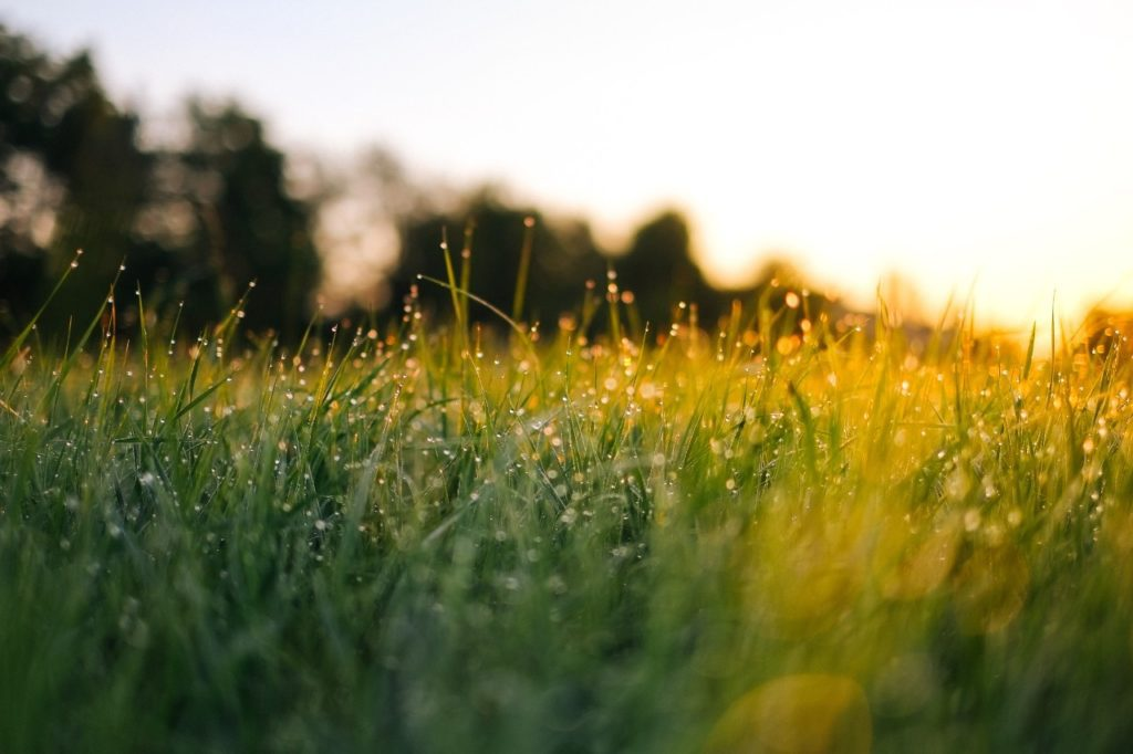 fall-lawn-care-schedule
