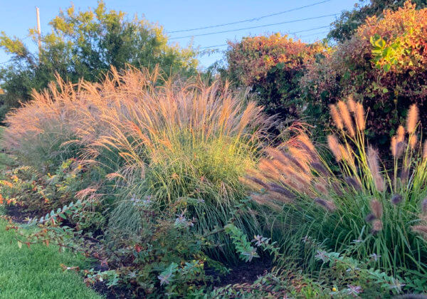 Plants planted by our landscapers